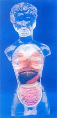 脑解剖模型.头颅骨模型.口腔解剖模型.医学模型.医学教学模型.医教模