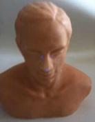 针灸头部训练模型    1000TS