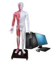 光电感应多媒体人体针灸穴位发光模型 MAW-170E