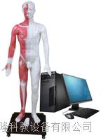 光电感应多媒体人体针灸穴位发光模型 ZKMAW-170E