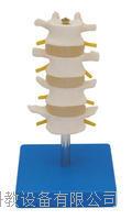正常腰椎组合(四节) KAH/A303B