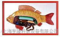 鱼解剖浮雕模型 KAH2079-28