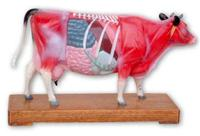 牛體針穴位模型 -