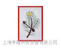 针叶树浮雕模型 KAH2079-39
