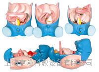消化、呼吸、泌尿、生殖、体腔发生(5部件) KAH5022