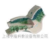 叶构造模型 KAH3206