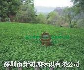 甘肃麦积山 MJS-3