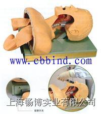 高级人体气管插管训练模型 CBB-50