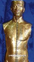 针灸铜人模型|半身人体针灸铜人模型 CB-BTR