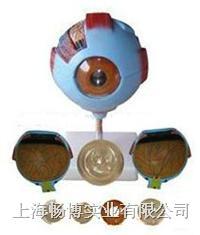 医学模型 眼睛模型 眼球模型 CBB/316