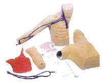 临床技能模型|外周穿刺、中心静脉穿刺插管模型 KAH/L69C