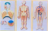医学教学模型|人体神经系列浮雕 GD-0330M