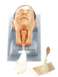 环甲膜穿刺和切开训练模型  KAH-HJM