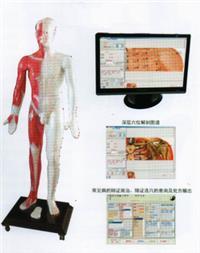 中医光电感应多媒体人体针灸穴位发光模型 MAW-170E