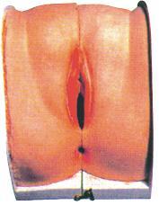 人体模型、避孕指导模型