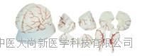 新型脑解剖模型 SX-446