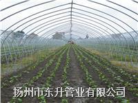扬州蔬菜大棚