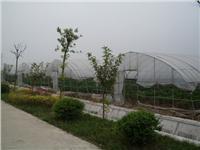 宝应蔬菜大棚/邗江蔬菜大棚/高邮蔬菜大棚