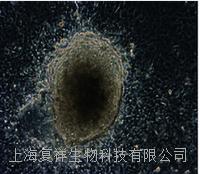 美國MEFs (CF1)小鼠胚胎成纖維細胞  PCEMM02