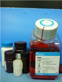 Collagenase胶原酶I(分装) orj-1237