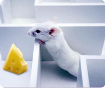 动物行为学实验仪器