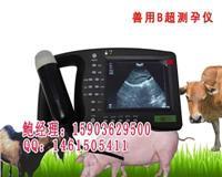 猪B超生产厂家,猪B超经销商 HRQ-2000AV