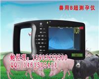猪B超价格/猪用B超价格/猪B超妊娠诊断仪 HRQ-5000AV