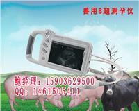 牛用B超妊娠诊断仪/牛场专用B超机报价 HRQ-P09