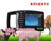 母猪专用B超诊断仪器测孕仪器厂家报价 hrq-5000av