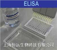 大鼠血小板生成素ELISA试剂盒 HY22202E