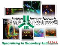 熒光、生物素、HRP、AP標記二抗 熒光、生物素、HRP、AP標記二抗