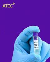 大鼠膀胱平滑肌细胞 atcc菌种 atcc菌种