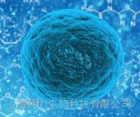 鸭胚原代成纤维细胞 鸭胚原代成纤维细胞