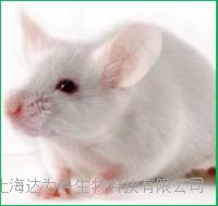 小鼠单克隆抗体制备