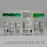 Recombinant Human IL-1RA|重组人白介素-1受体拮抗剂