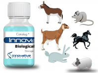 Goat anti-Dog <FONT COLOR=red><FONT COLOR=red>NGAL</font></font> (Lipocalin-2) Unconjugated A.P. IRAAP0070