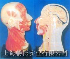 医学解剖骨骼模型总汇