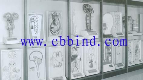 人体各大系统浮雕模型总汇