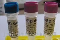 磷酸化Bcl-2抗体抗体
